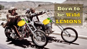 Born to be Wild Lemons